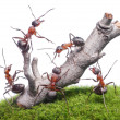 Stock Photo: Ants bring down old tree, teamwork isolated on white