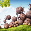 Team of ants collecting seeds in stock, teamwork — Stock Photo