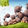 Стоковое фото: Team of ants collecting seeds in stock, teamwork