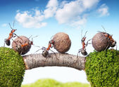 Team of ants rolling stones on bridge, teamwork — Stock Photo