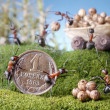 Ants market, purchase, ant tales — Stock Photo