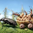 Ants harnessing the bug, ant tales — Stock Photo #41073207