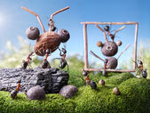 Ants sculptors, ant tales — Stock Photo