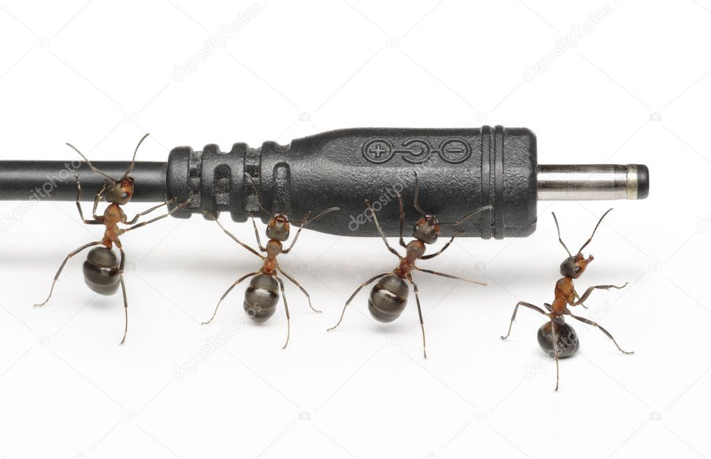 team of ants works with mobile phone plug connection teamwork stock photo antrey 5370896. Black Bedroom Furniture Sets. Home Design Ideas