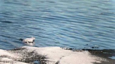 Fonte des glaces dans le lac — Vidéo