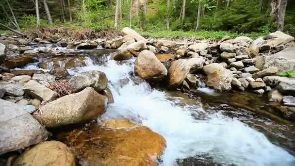 Cascades on the small river - horizontal movement — Vidéo