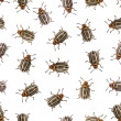 Seamless texture - Colorado beetle on white — Stock Photo #16828757