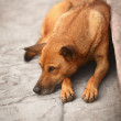 Homeless dog on the pavement — Stockfoto