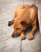 Hemlös hund på trottoaren — Stockfoto