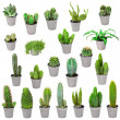Stock Photo: Set of indoor plants in pots - cactuses isolated on white