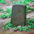 Tombstone for the pet grave - Stock Photo