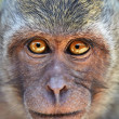 Portrait of curious monkey — Stock Photo