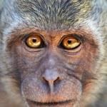 Portrait of curious monkey — Stock Photo