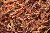 Fried insects on the market — Stock Photo