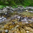 1920x1080 hidef, hdv - Small forest river — Stock Video