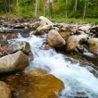 Stock Video: 1920x1080 hidef, hdv - Forest stream - panning