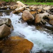 1920x1080 hidef, hdv - Mountain forest stream — Stock Video