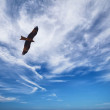 Black Kite in blue cloudy sky — Stock Photo