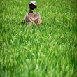 Home-made rustic scarecrow in a rice field. Indonesia — Stock Photo