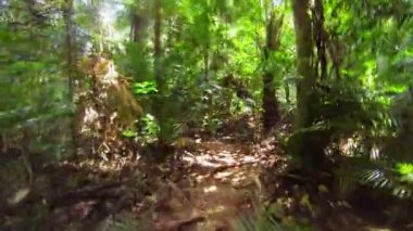 Fast running along a narrow path in the jungle — Stock Video