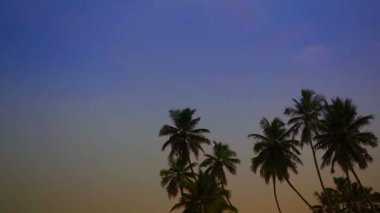 Video 1920x1080 - Tropical palm trees against evening sky — Stock Video