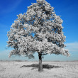 Fantastically unreal white tree on blue sky background - Stock Photo