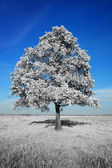 Fantastically unreal white tree on blue sky background — Stock Photo