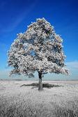 Fantasticamente irreale albero bianco su sfondo blu cielo — Foto Stock