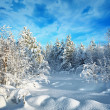 Trees in winter forest covered with hoarfrost and snow — Stock Photo