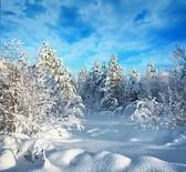 деревья в зимнем лесу покрытые инеем и снег — Стоковое фото