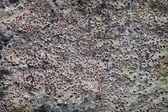 Rock surface with lichen — Stock Photo