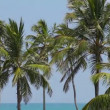 Stock Video: Group of coconut palms on the tropical ocean coast