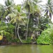 Sri Lanka, Bentota. Village on the banks of the river among the palms — Stock Video
