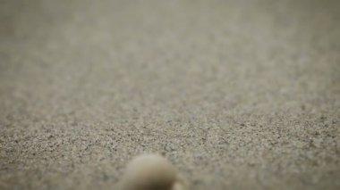 Hermit crabs fleeing on the sea sand — Stock Video