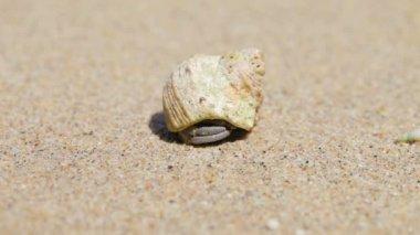 Temiz kum üzerinde irili ufaklı yalnızcıl yengeç — Stok video