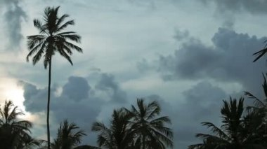 Video 1920x1080 - Evening landscape with palm trees in the background of the cloudy sky — Stock Video