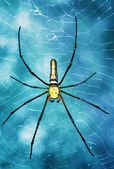 Tropical spider - nephila in the web — Stock Photo