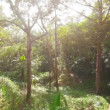Stock Video: Video 1080p - Tropical forest filled sunlight