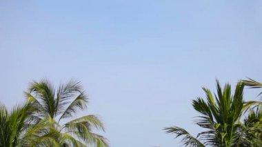 Video 1080p - Group of palm trees against a blue tropical day sky — Stock Video