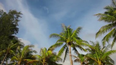 Video 1080p - The tops of tropical trees on the seashore — Stock Video