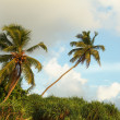 Stock Photo: Coconut palms on the tropical ocean coast