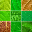 Green leafs square collage - seamless pattern — Stock Photo