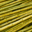 Bamboo trunks prepared for building — Foto Stock