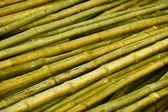 Bambus stämme vorbereitet für gebäude — Stockfoto