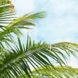 Video 1920x1080 - Leaves of palm trees swaying on sky background close-up — Stock Video