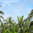 Video 1920x1080 - Palms grove swaying on the wind against a blue sky — Stock Video