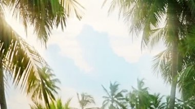 Video 1920x1080 - Blinding light of the sun through the tropical palm leaves — Stock Video