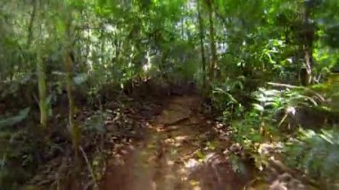 Video 1920x1080 - Fast running along the winding path in the rainforest — Stock Video