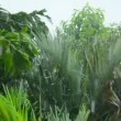 Video 1080p - The rainy season in the tropics — Stock Video