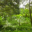 Stock Video: Video 1080p - Not dense tropical forest